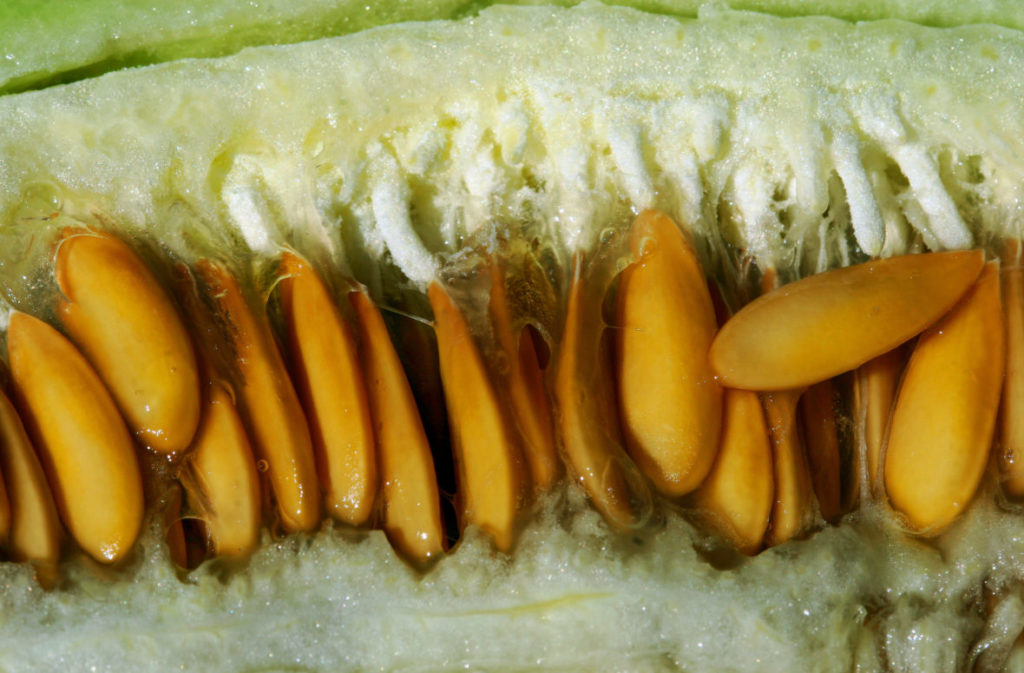 дынные семечки при цистите