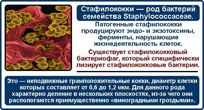 область применения бактериофагов