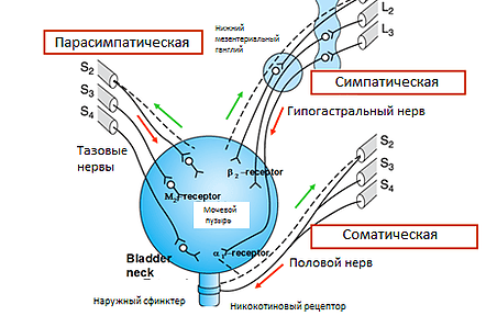 нейрогенный мочевой пузырь