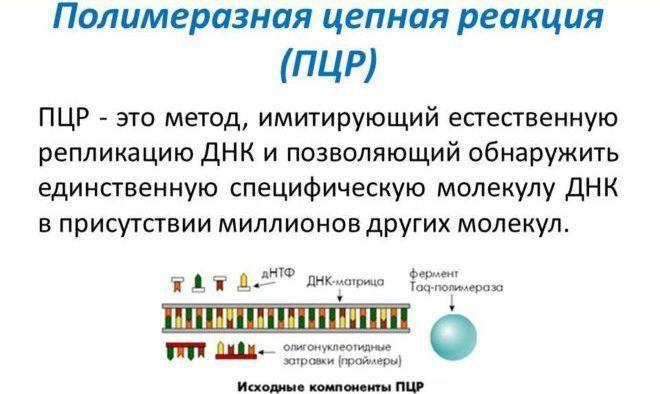 Методика ПЦР исследования урины
